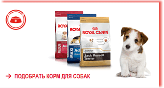 royal_canin_dry-for_dogs