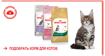 royal_canin_dry-for_cats