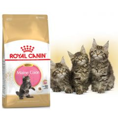 Royal Canin Kitten Maine Coon роял канин сухой корм для котят породы мейн кун до 15 месяцев