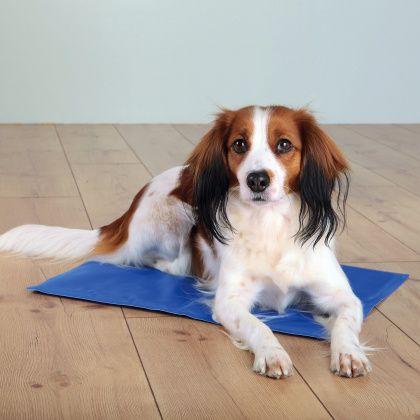 Корм для собак Акана: разновидности, описание acana для