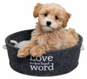 Мягкое место с подушкой для собак и кошек Lian Trixie 38395
